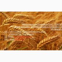 Оптовая продажа пшеницы 3 класса твёрдых сортов