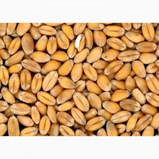 Продам Пшеница 3 класс, ГОСТ 52554-2006 по России и на экспорт