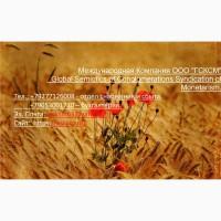 Оптовая продажа пшеницы 4 класса клейковиной 20 - 22%