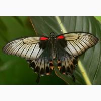 Яркие Живые Бабочки изКоста Рикки