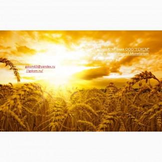Оптовая продажа пшеницы 5 класса фуражная