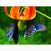 Тропические Живые Бабочки изФилиппин
