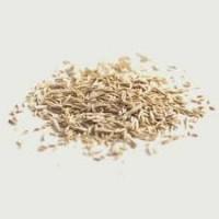 Закупаем семена райграса однолетнего оптом от 5 тонн