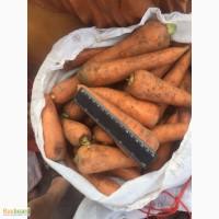 Продаю морковь 1сорта оптом 9р