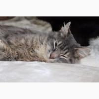 Молодой кот Пушистик