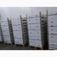Продаем яблоки оптом от 1т из собственного хозяйства, склад в Волгограде