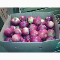 Яблоки оптом. Без посредников. От 5 тонн