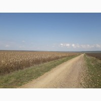 Хозяйство 680 гектар