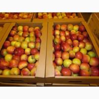 Яблоки оптом цена: 17.00 руб / кг