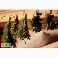 Куплю лекарственные травы, корни, сборы, чай