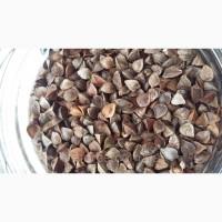 ООО НПП «Зарайские семена» закупает семена гречихи от 40 тонн