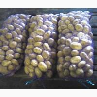 Продам продовольственный картофель оптом