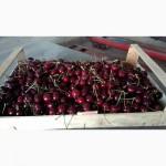 Компания Крымагротара, ящики для упаковки черешни, урожай 2019 г