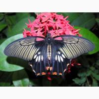 Тропические Живые Бабочки изКоста Рикки