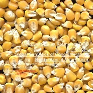 Оптовая продажа кукуруза продовольственная и фуражная