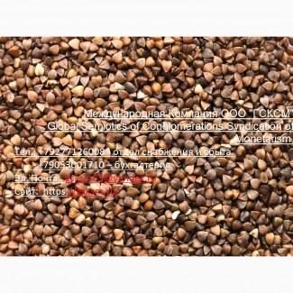 Оптовая продажа Гречиха продовольственная