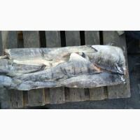 Продаем морепродукты, рыба икра