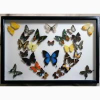 Продам уникальное панно из тропических бабочек