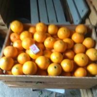Продам апельсины сорта Вашингтон калибр 7-12