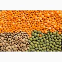 ООО НПП «Зарайские семена» закупаем семена чечевицы от 20 тонн