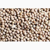 ООО НПП «Зарайские семена» покупает семена люпина от 20 тонн