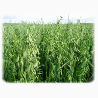 ООО НПП «Зарайские семена» продаёт семена овса ярового