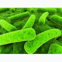 Пробиотики для сельскохозяйственных животных