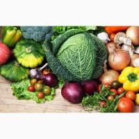 Реализуем овощи оптом