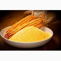 Мука кукурузная тонкого помола оптом