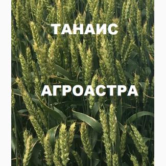 Семена озимой мягкой пшеницы сорт Танаис ЭС/РС1/РС2