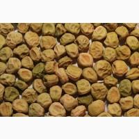 ООО НПП «Зарайские семена» покупает семена:горох посевной от 20 тонн