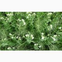 ООО НПП «Зарайские семена» реализует семена гороха посевного оптом