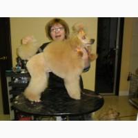 Стрижки собак и кошек в зоосалоне Любимец на дому