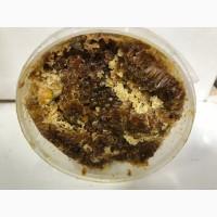 Перга (ферментированная пыльца растений)