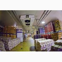 Сыр весовой оптом от производителя