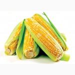 Поставляем кукурузу 3 и 4 класса