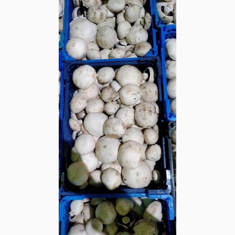 Продам грибы Шампиньоны, купить грибы Шампиньоны, Москва ...