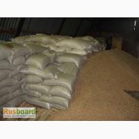 Пшеница 5 класса ГОСТ России