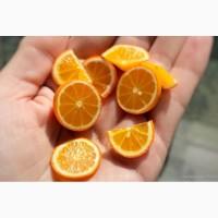 Экстракт цитрусовых биофлавоноидов сухой