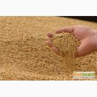 Твердая пшеница 2 класса ГОСТ России