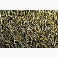 ООО НПП «Зарайские семена» покупает семена: овсяница красная от 20 тонн