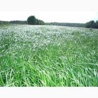 Куплю семена трав