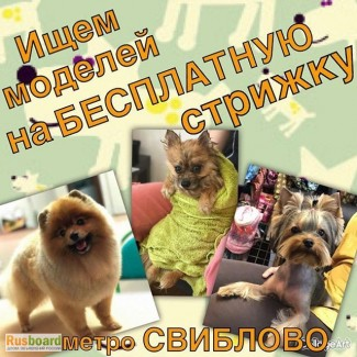 Курсы. Профессия Грумер. Обучение - груминг собак и кошек. Стрижка, Тримминг