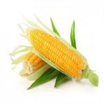 Реализуем Кукурузу 3, 4 класса оптом