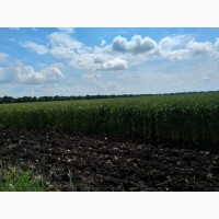 Земельный участок 1400 Га (пашня)