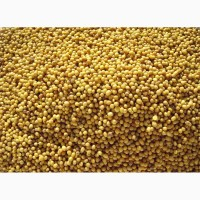 ООО НПП «Зарайские семена» покупает семена горчицы желтой от 20 тонн
