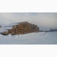 Круглый лес пиловочник, диаметр от 18 см до 50 см( сосна )