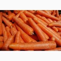 Продаю морковь оптом от производителя
