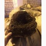 Лист Бадана, Чага березовая гриб, Тмин чёрный Корень лопуха