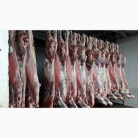 Мясо оптом Говядина, Свинина, Курица